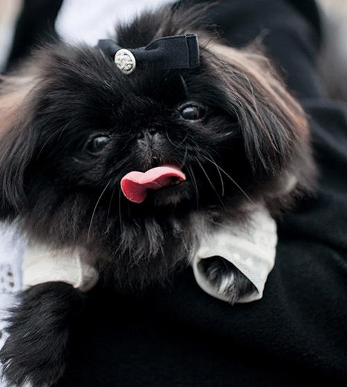 Собачка с бантиком на руках у модницы