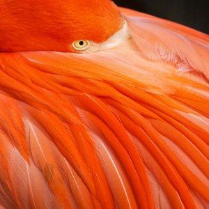 Оранжевый цвет: характеристики и значение