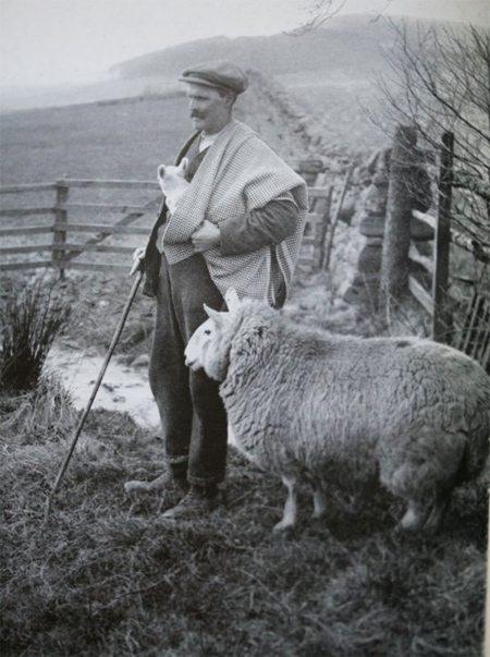Шотландский пастух, бордер тартан