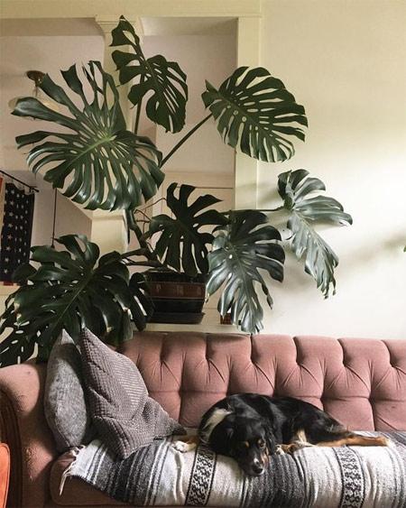 Огромный тропический цветок как украшение квартиры