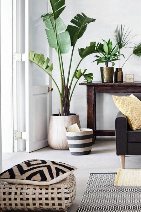Тропическое растение в вазоне