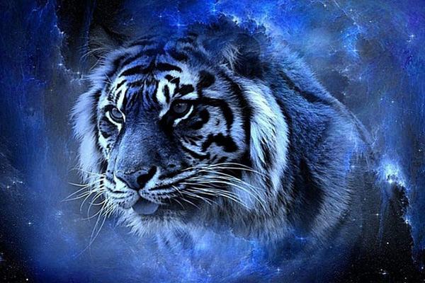 Какой ты, Голубой Водяной Тигр?